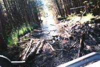The Log Jam!